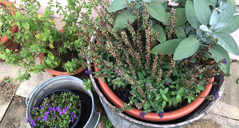 Bienenweide für Balkon und Terrasse
